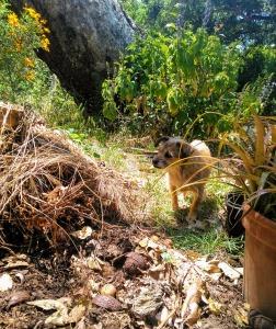 Jack at Warbler grave