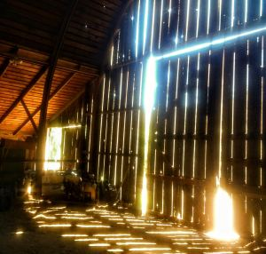 barn morning
